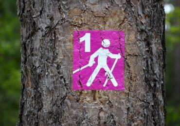 Moda na chodzenie z kijkami nie przeminęła. Kolejne imprezy nordic walking w drodze!